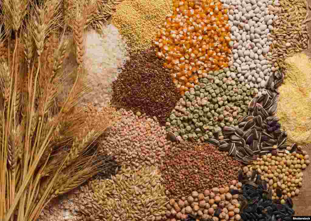 Общее производство зерновых культур в мире за четверть века (1995-2019) выросло на 57%, судя по статистике ФАО ООН, причем в последние десять лет его рост неизменно опережал рост общемирового спроса на зерно. К 2029 году, по текущему прогнозу ФАО, мировое производство зерновых увеличится еще примерно на 14%. Более половины этого прироста (52%) придется на кукурузу, 23% - на пшеницу, 8% - на фуражное зерно.